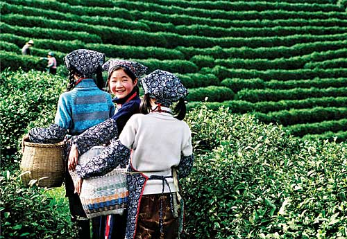 China girls_with_tea farms